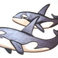 orca-whales