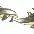 small-dolphins